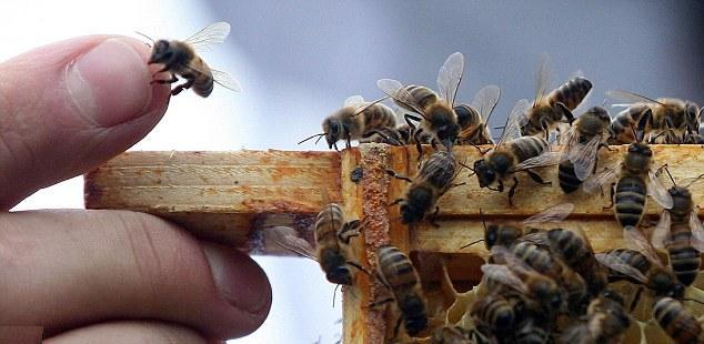 Read more about the article Here's How Your Grocery Store Will Look When All the Bees Die