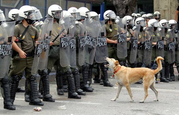 the greek riot dogs