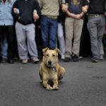 01-The Story of Loukanikos and Other Greek Riot Dogs