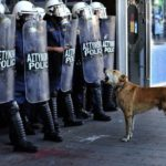06-The Story of Loukanikos and Other Greek Riot Dogs