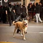 10-The Story of Loukanikos and Other Greek Riot Dogs