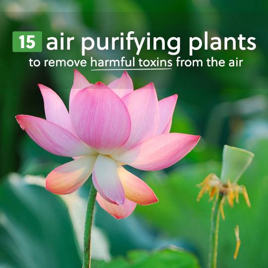 15 Air Purifying Plants to Remove Harmful Toxins