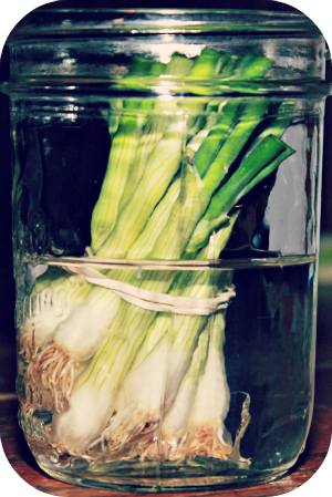 greenonions-foods-that-can-be-regrown