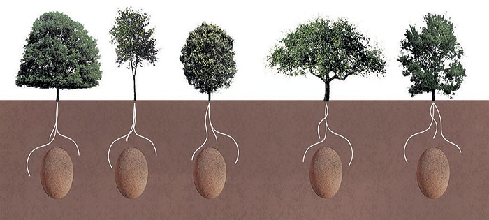 Ingenious, Organic Burial Capsules Will Transform Your Loved Ones Into Trees After They Die