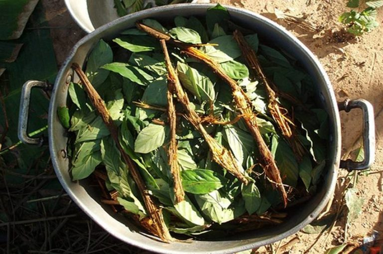 Harmine: Ingredient Found in Ayahuasca May Be a Potential Treatment for Diabetes