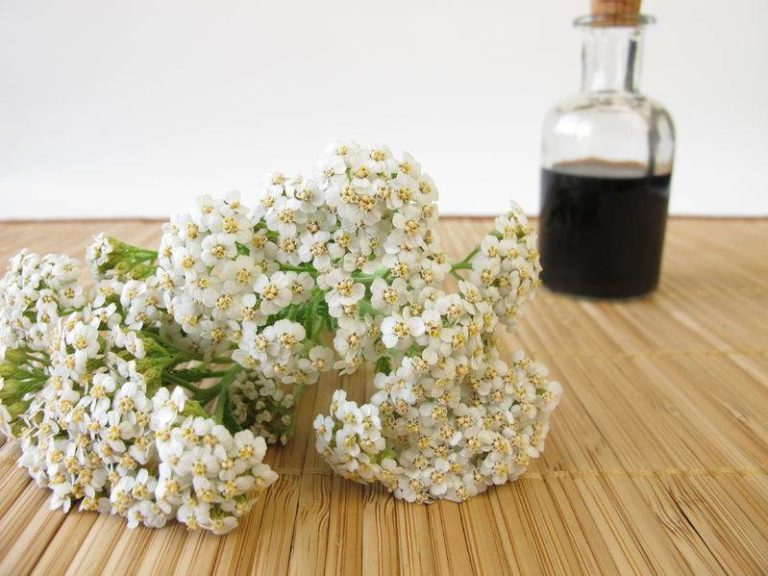 How to Make a Yarrow Insect Repellent – Better & Safer Than DEET!