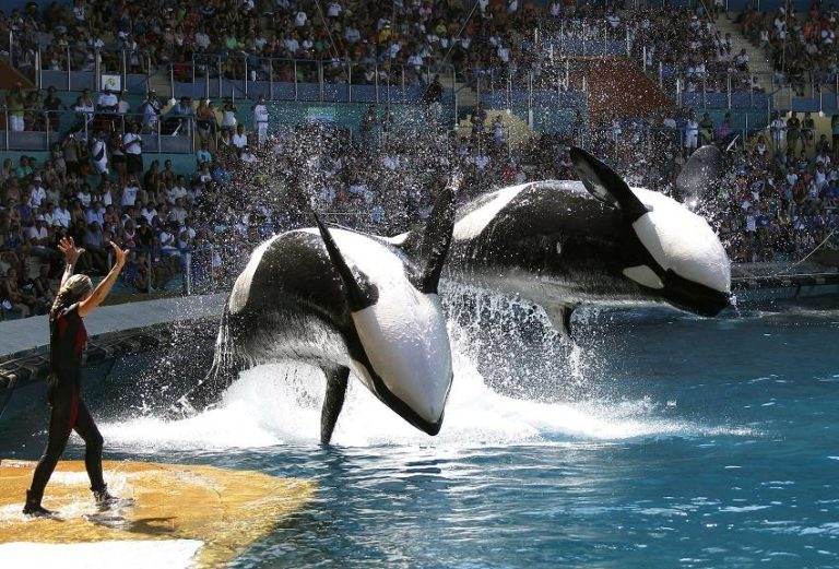 Blackfish: the Startling Documentary That Exposes the Truth about Captive Animals