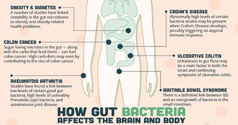 Bacteria - Probiotic