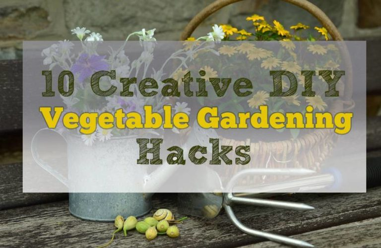 10 Creative DIY Vegetable Gardening Hacks