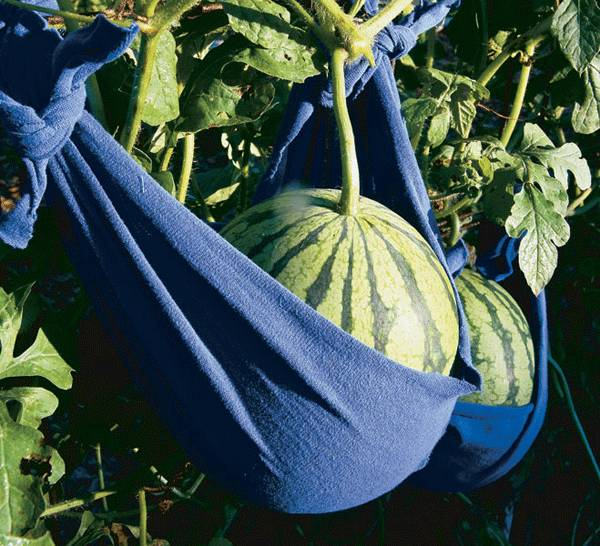 Make slings for your melons