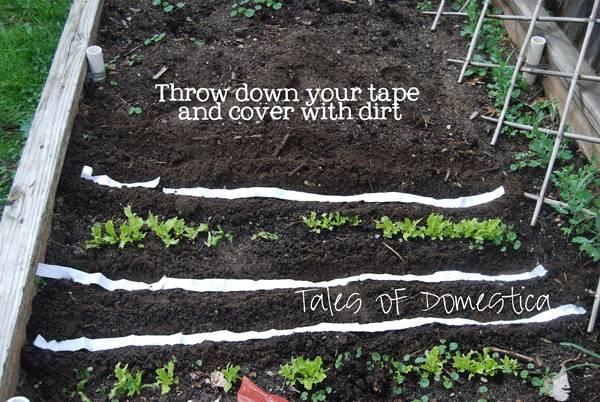 10 Creative DIY Vegetable Gardening Hacks