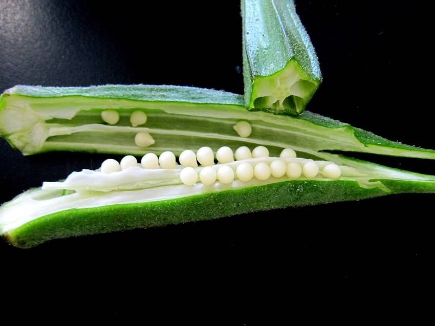 Use Okra Treat and Prevent Diabetes