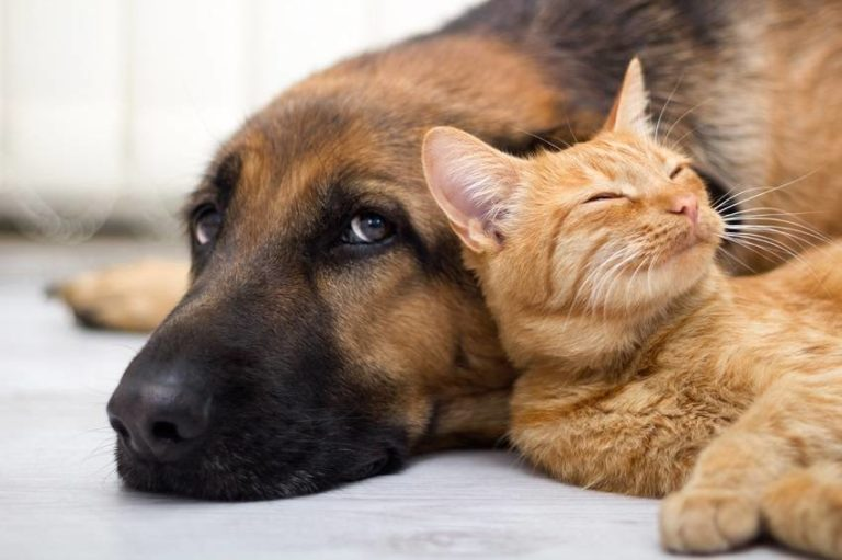 Cat People Are More Intelligent Than Dog People, Study Finds