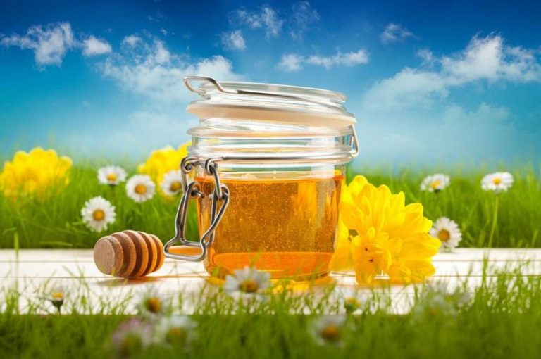 Get to Know the Potent Healing Properties of Honey