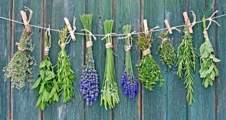 5 Powerful Medicinal Plants You Can Grow at Home