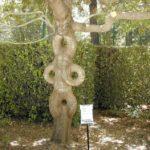 05-Axel Erlandson tree park