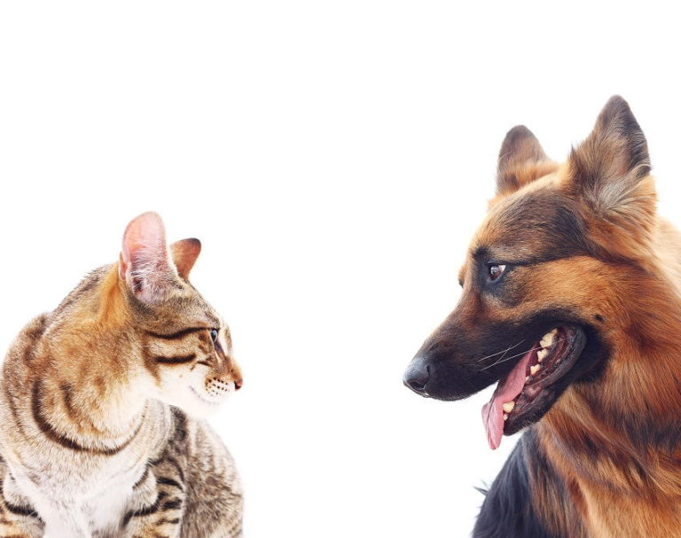 Who Loves Us More: Cats or Dogs? Scientists Now Have a Definite Answer