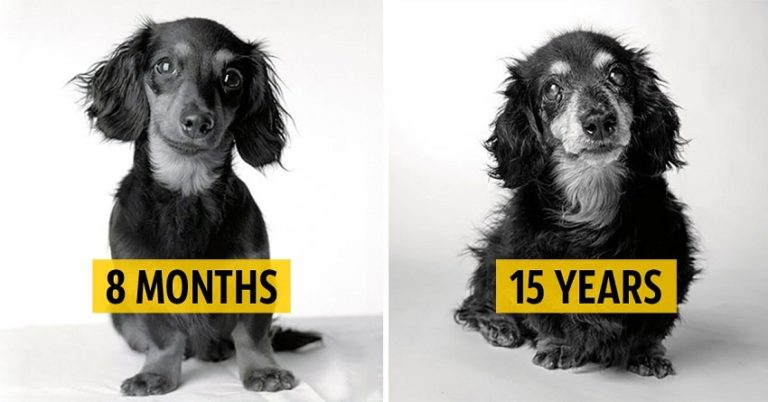 Striking Photos of Aging Dogs Show Their Transformation from Playful Pups to Wise Old Friends