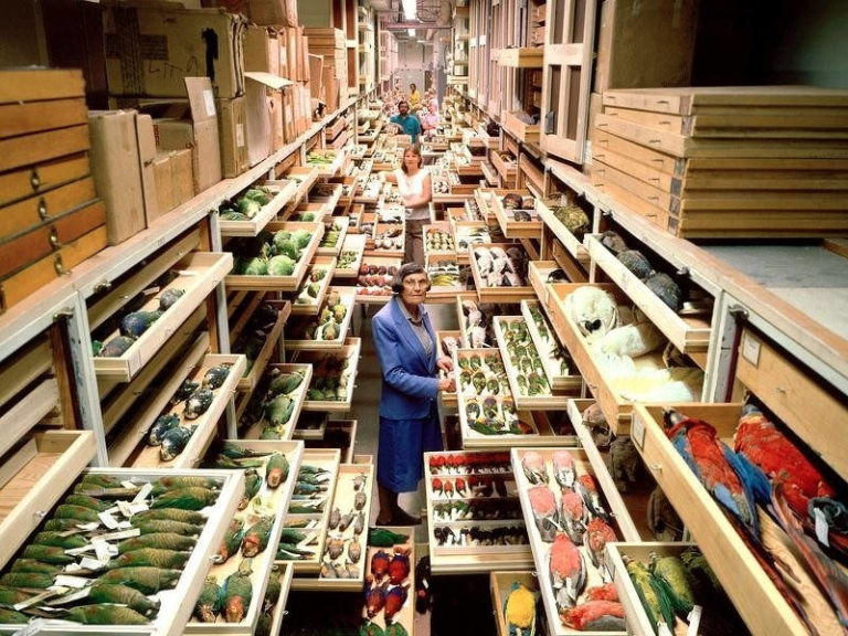 A View Inside Hidden Smithsonian's Archives Shows the Incredible Richness of Their Collections