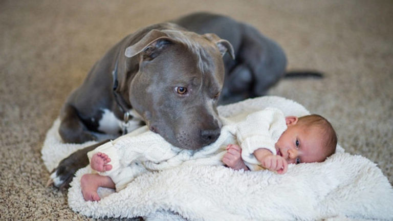This Story about the Incredible Bond between a Pit Bull and a Little Girl Will Touch Your Heart
