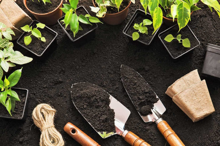 5 Clever Gardening Tips to Grow More Vegetables and Fruits in Less Time