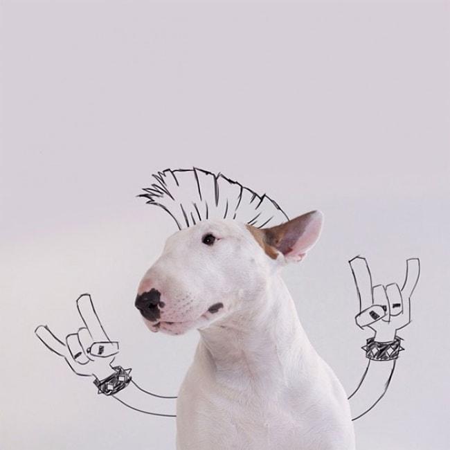 Jimmy Bull Terrier 1
