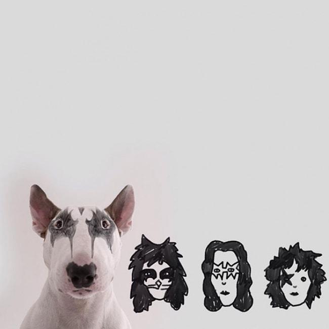 Jimmy Bull Terrier 8