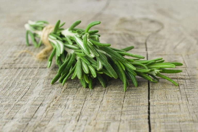 Study Finds Sniffing Rosemary Can Improve Memory by up to 75%!