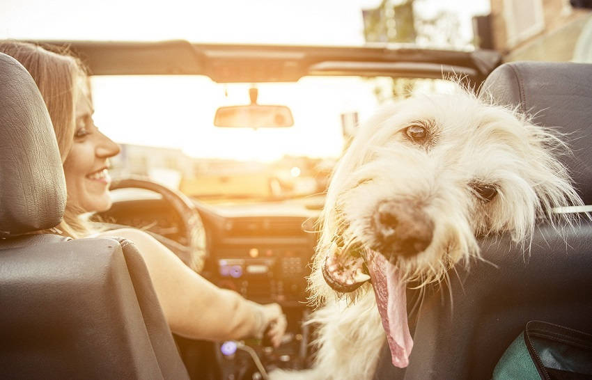 Dog S Heart Rate Syncs Up With Their Owner S Study Finds