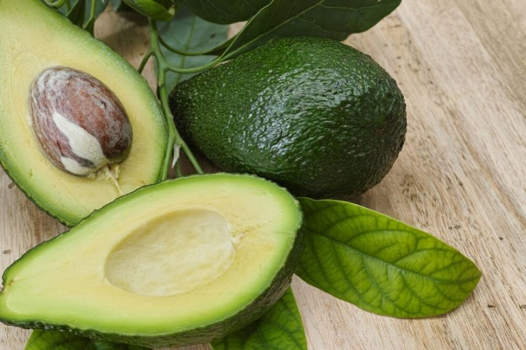 How to Grow Avocado Tree from Pit for an Endless Supply of Organic Avocados
