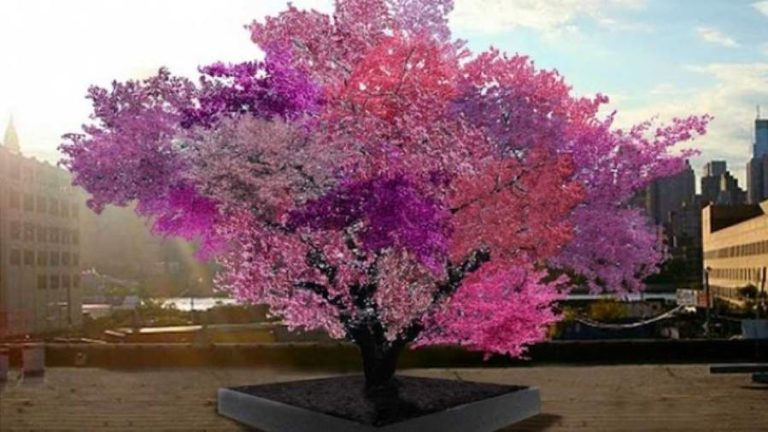 This Incredible Tree Produces 40 Different Kinds of Fruit