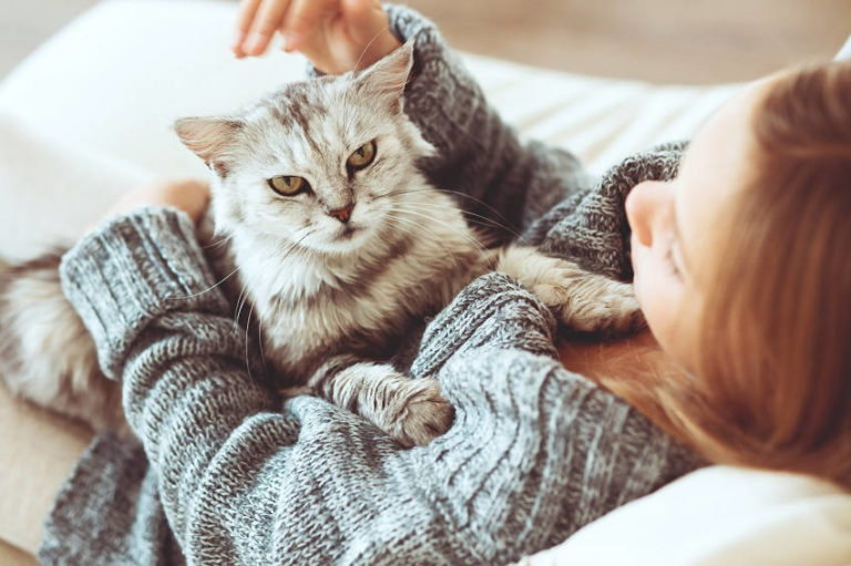 4 Benefits of Being a Cat Owner – Proven by Science!