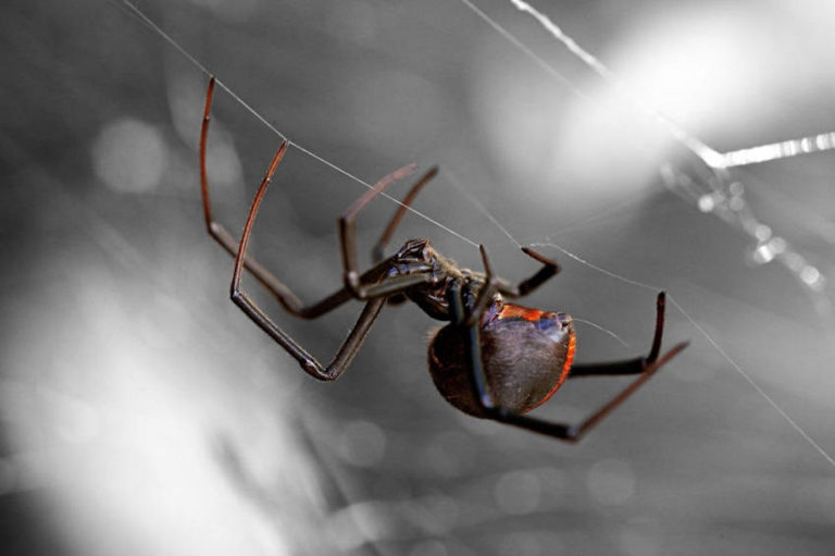 Get Rid of Spiders at Home with These 5 Natural Ways