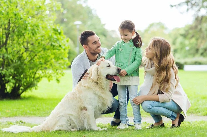 How to look after your pet to make sure it is happy and healthy