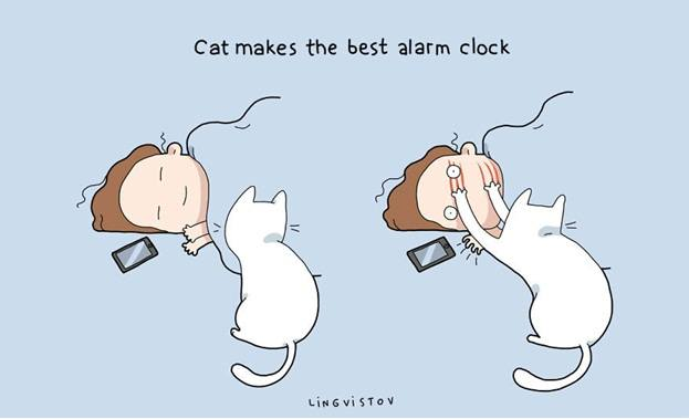 The Reality of Owning a Cat Captured in a Series of Funny Illustrations