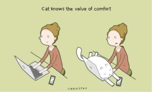 owning-a-cat-funny-illustrations-7