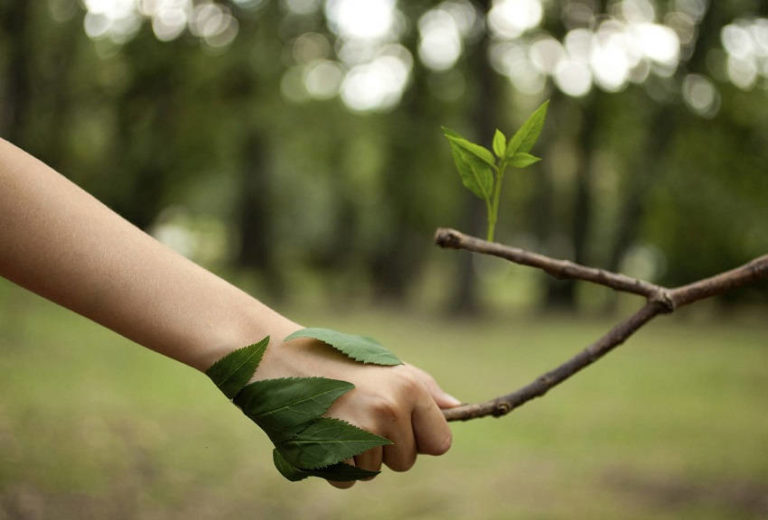8 Ways to Help the Environment in Your Everyday Life
