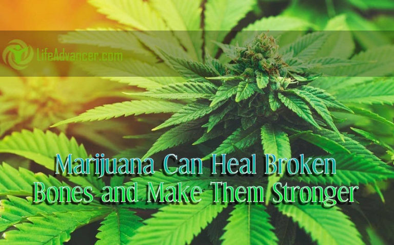 Marijuana Can Heal Broken Bones and Make Them Stronger, Study Finds
