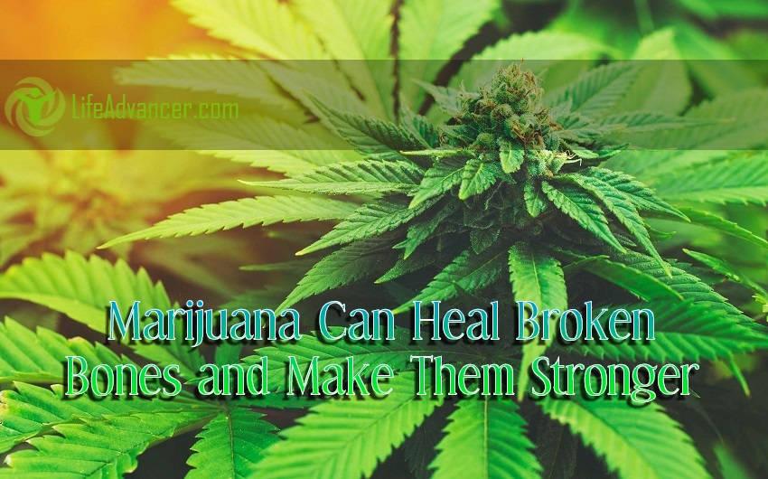 Marijuana Can Heal Broken Bones