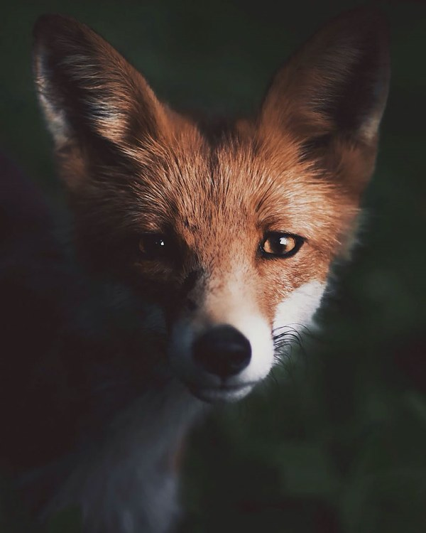 The Soul of the Forest Captured in Unique Wildlife Images by 21-Year-Old Finnish Photographer