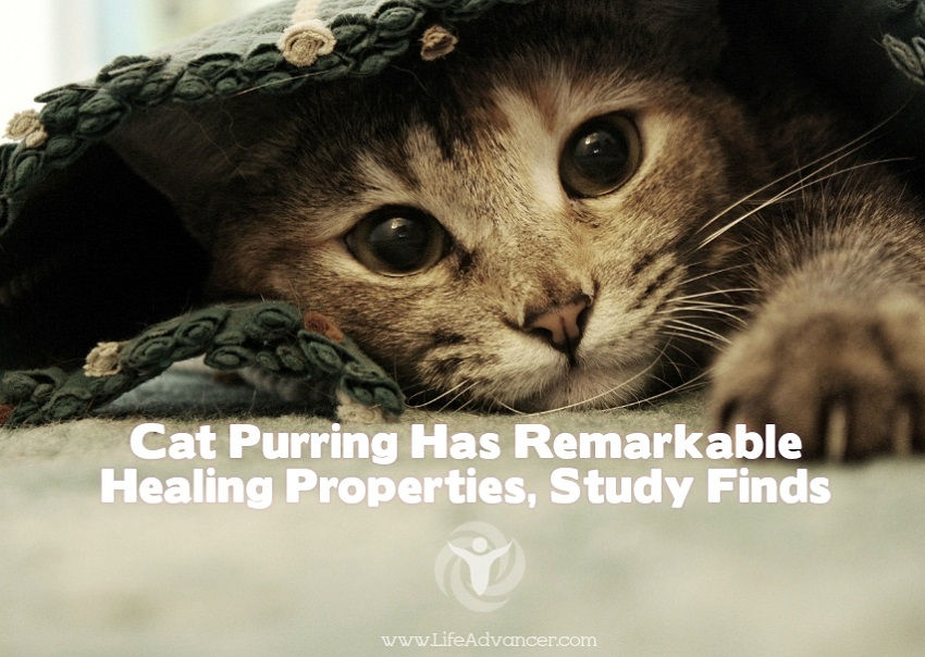 Cat Purring Has Remarkable Healing Properties Study Finds