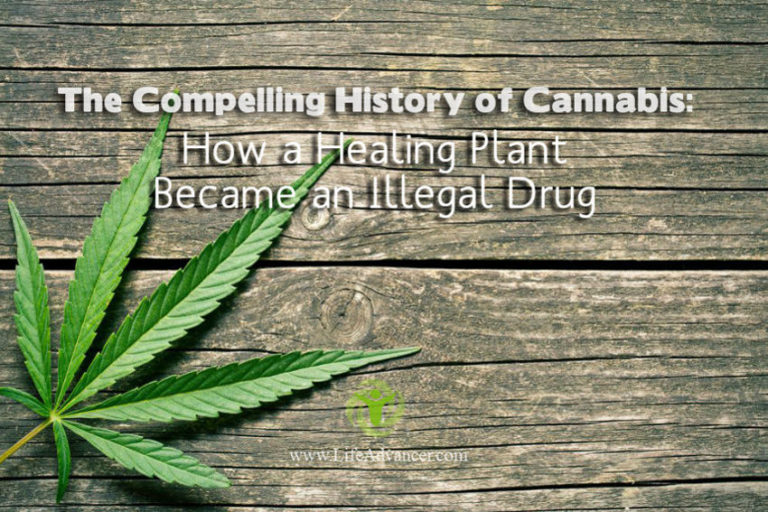 The Compelling History of Cannabis: How a Healing Plant Became Illegal