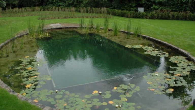 How to Build a Natural Pool in Your Garden