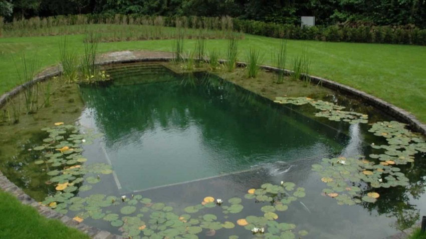 How to build a natural pool in your garden for How to build a pool