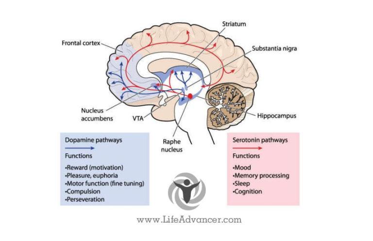 Serotonin Deficiency: How Its Symptoms Make You Anxious & Depressed