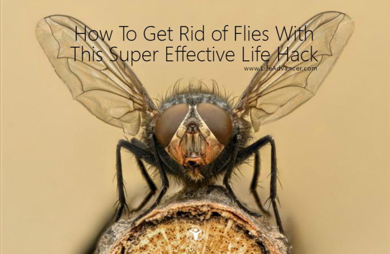 How to Get Rid of Flies with This Super Effective Life Hack