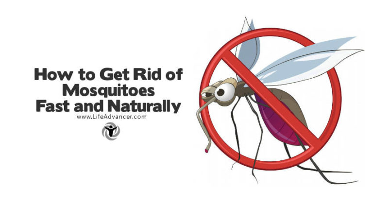 How to Get Rid of Mosquitoes with Fast and Natural Methods