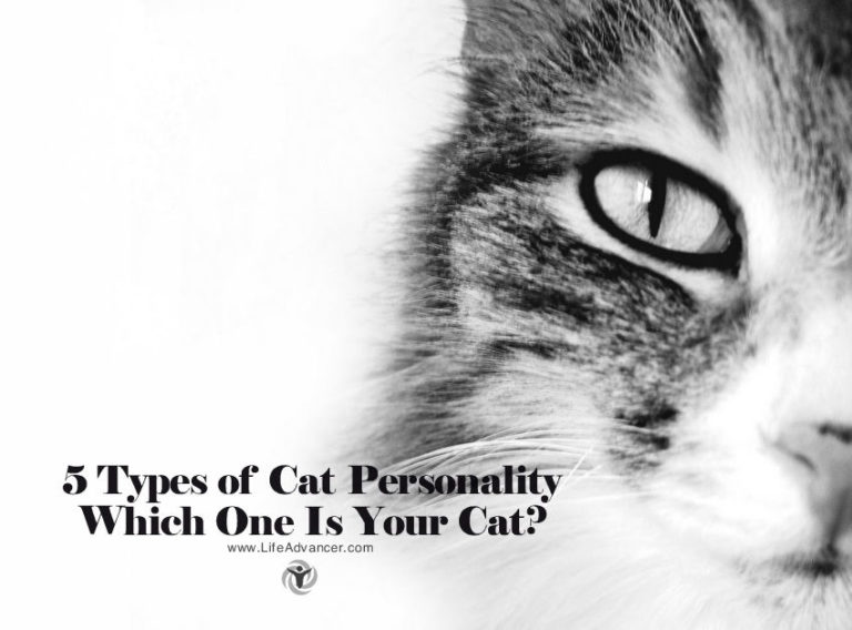 5 Types of Cat Personality: Which One Is Your Cat?