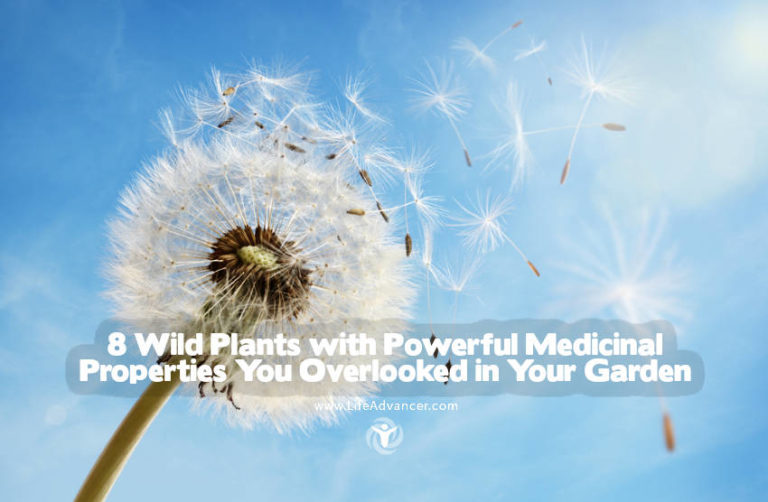 8 Wild Plants with Powerful Medicinal Properties You Overlooked in Your Garden