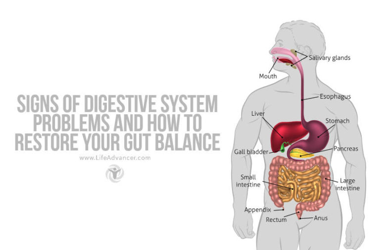 Signs of Digestive System Problems (and How to Restore Your Gut Balance)